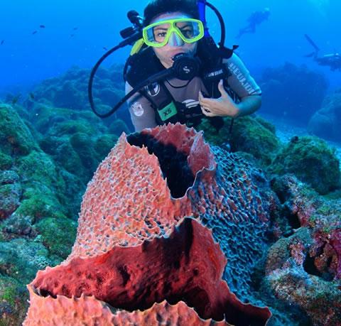 Mergulhos em Fernando de Noronha